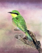 Little Bee Eater wildlife painting