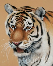 amur-tiger-painting.jpg