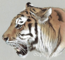 Tiger print - wildlife painting Amur Tiger