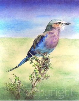 Wildlife painting - lilac breasted roller