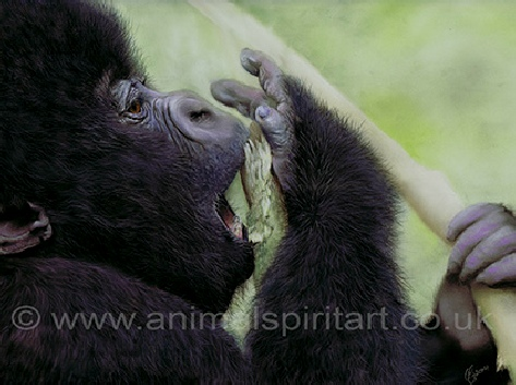 baby-gorilla-wildlife-art