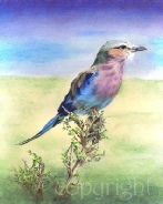 Lilac Breasted Roller wildlife painting