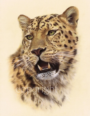 Wildlife painting - Amur leopard