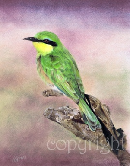 Wildlife painting - little bee eater