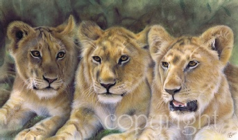 Lion Cubs wildlife print