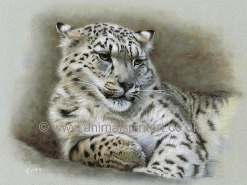 snow-leopard-painting.jpg
