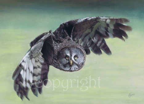 great grey owl bird of prey painting